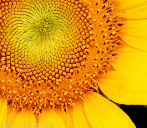 20110712-IMG_7141 web