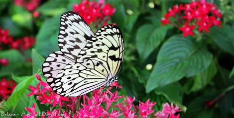 20110712-IMG_7345 web